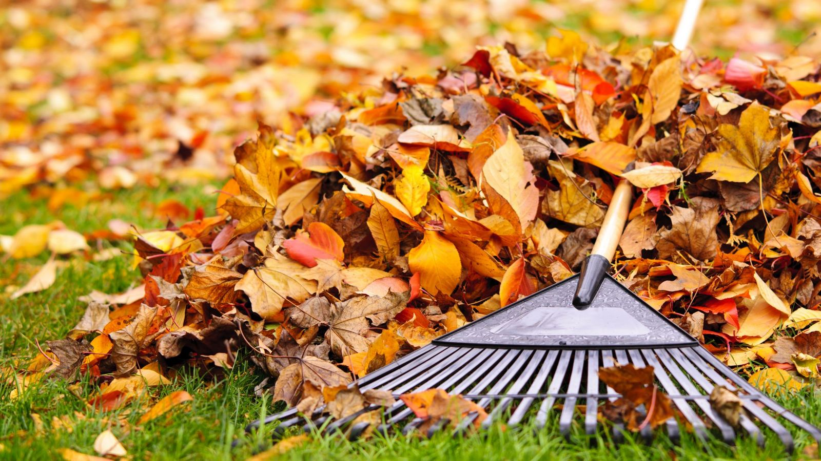 листья опавшие